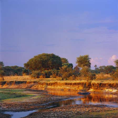 hippo in savannah in tanzania Archivio Fotografico - 131780165