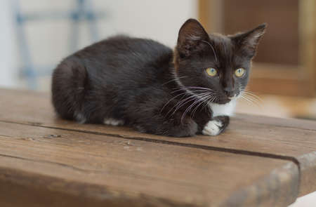 Pretty black and white kitten crouched on the wooden bench