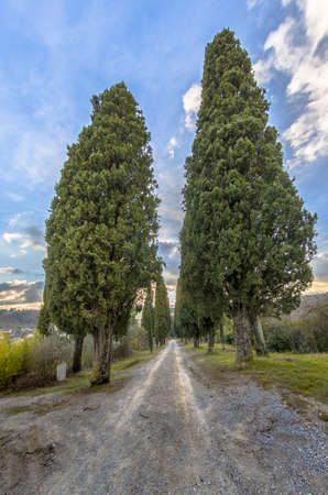 Tree-lined avenue with cypresses typical of Tuscany