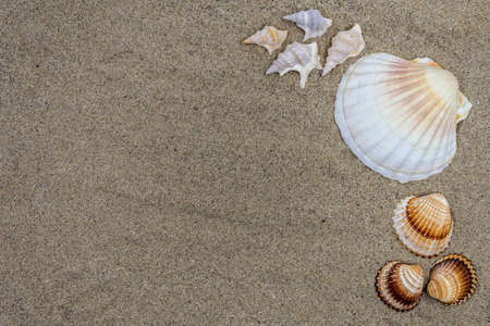 Background with sand and shells Stock Photo
