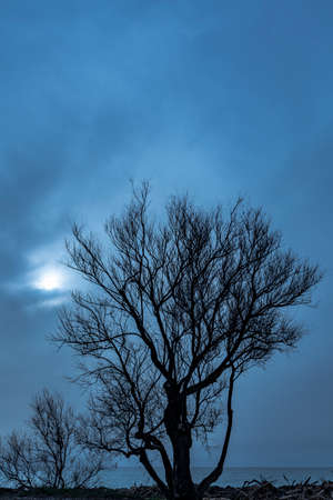 Bare tree with sea in the background and sky with haze