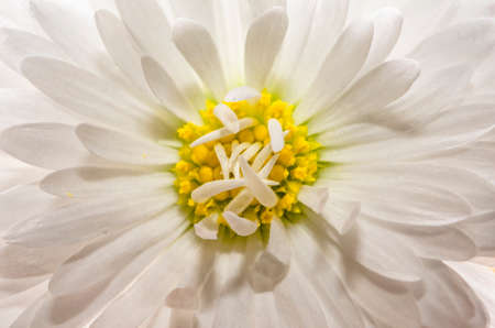 Beautiful close-up of flower with many petals