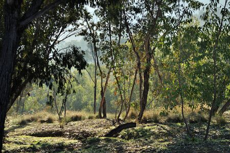 underbrush: Autumn wind in the underbrush Stock Photo