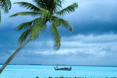 summer sunny day on coral island with palm and emerald water on Maldives island