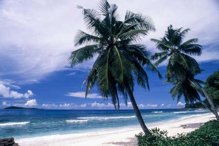 tropical beach with palm trees in Anse Banane, La Digue island, Seichelles Standard-Bild