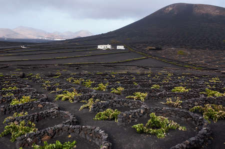 vineyard region of Lanzarote; Canary Islands 免版税图像