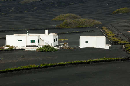 vineyard region of Lanzarote; Canary Islands 写真素材
