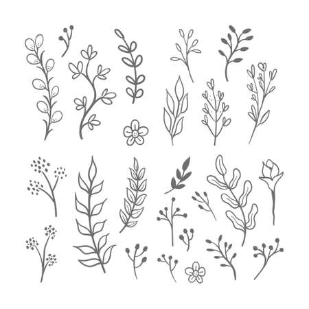 Hand drawn floral ornaments. Flowers and leaves doodle vector collection. Decorative plants illustrations. Nature decoration drawings handmade style.