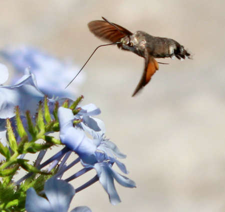 pollinating insect photo