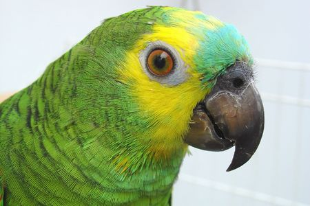 Parrot Stock Photo - 4887826