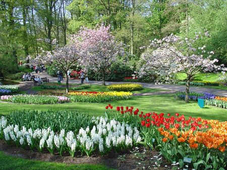 Flower season Standard-Bild