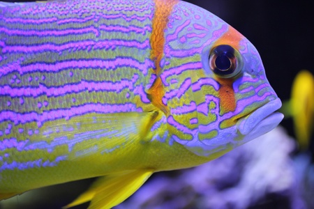 Colorful fish Stock Photo - 8864430