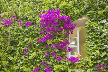 Window full of flowers and leafs photo