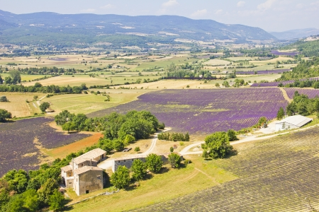 Aerial view of Provence and the lavender fields