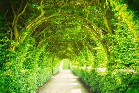 나무와 빛이있는 정원