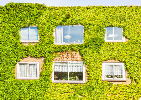 Ecological building with the wall full of plants