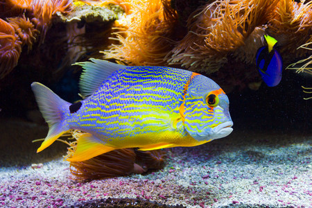tank fish: Colorful fish