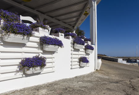 Arriving at the port of Linosa you are greeted by this wall of purple flowers. The white wall and the blue sea as a background the postcard is a dream.