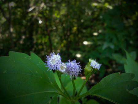 purple flower: Purple flower in wild Stock Photo