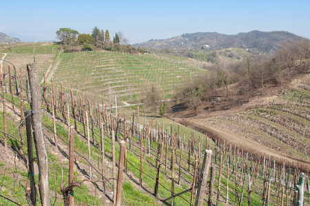 Springtime landscape of prosecco vineyard hills, Rolle, Treviso, Italy Stock Photo