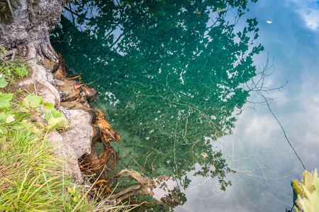 Leaves reflection on transparent and crystalline waters of Livenza river source, Santissima, Friuli, Italy