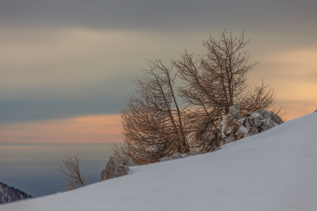 Pair of lone larches on snowy slope with  venetian lagoon in the background, Col Visentin, Belluno, Veneto, Italy