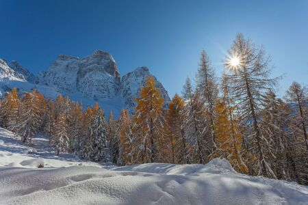 Sun filtering in the middle of orange larches with Mount Pelmo background
