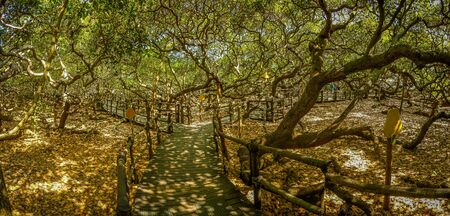 View of the largest cashew tree of the world Stock Photo
