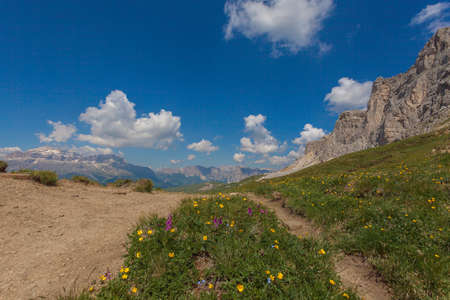 Flowery meadow with the Sella massif and Settsass walls in the background, Dolomites, Italy