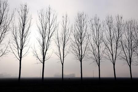 iluminado a contraluz: árboles a contraluz de niebla Foto de archivo