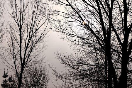 iluminado a contraluz: árboles a contraluz de niebla en un día de invierno