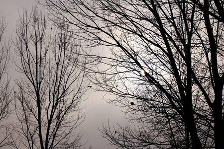iluminado a contraluz: árboles a contraluz en un día de invierno de niebla.