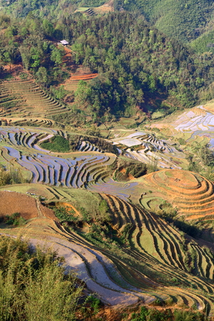 Landscape view of Asian terrace rice fields Stock Photo