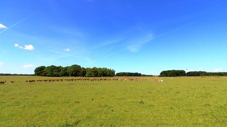 Jaegersborg Deer Park (Deer Park) near Copenhagen, Denmark.