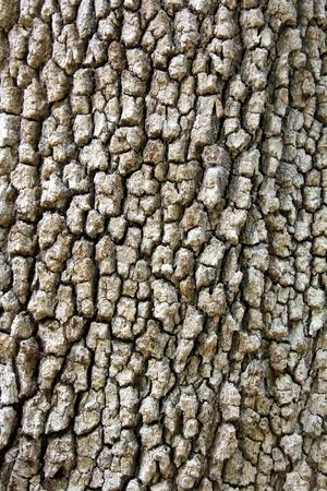 closeup of wooden Standard-Bild