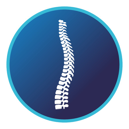 Spine anatomy. Vector flat design for radiology orthopedic research hospital for body joints and spine bones, orthopedic diagnostics or corrective therapy. Vector illustration