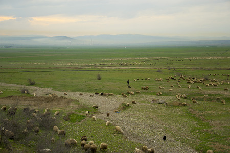 vastness: Uncultivated grazing of the hill flock
