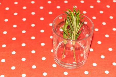 Rosemary cuttings, propagation in water concept. Benefits of rosemary. Banco de Imagens