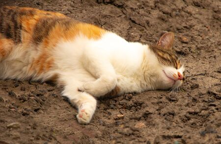 Portrait of a cat sleeping on the ground. Imagens