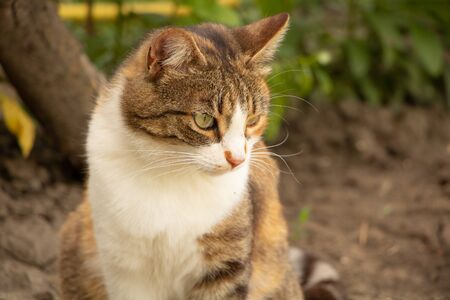 Portrait of a thoughtful cat sitting in the garden.