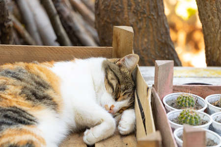 Funny cat sleeping. Portret of lovely three colored cat Stock Photo