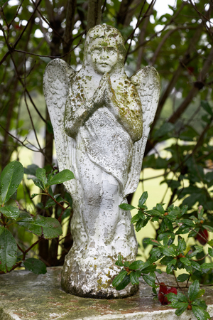 angel headstone: Lichen-Covered Cemetery Angel Stock Photo