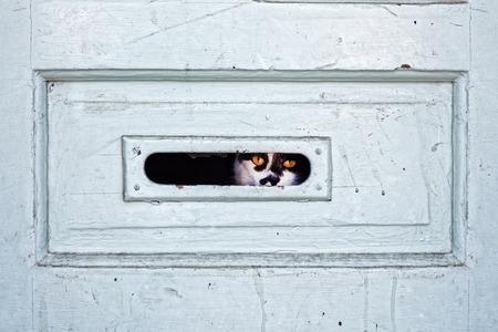 mail slot: Black and white mail slot watch cat.