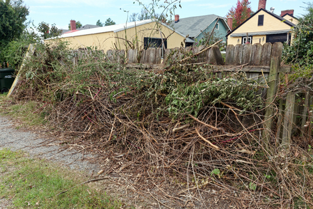 eyesore: Yard work debris, tree and shrub clippings piled against fence in alley. Horizontal.