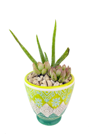 Aloe vera plant in ceramic pot. Isolated.