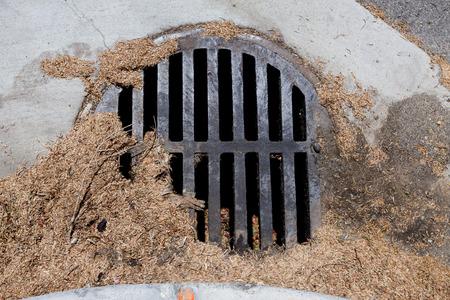 Sewer storm grate clogged with organic debris. Reklamní fotografie