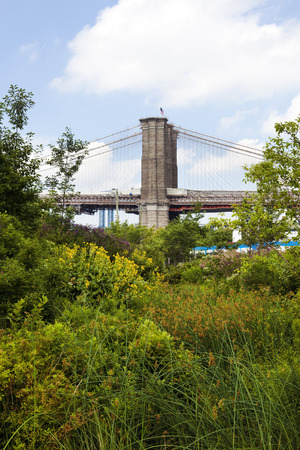 Brooklyn Bridge tower seen through trees and shrubbery. Vertical.