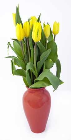 Yellow spring tulips in reddish orange vase. Isolated.