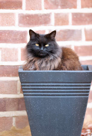 Close up of a black cat sitting in a flower pot against a brick wall.