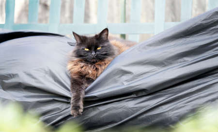 Close up of a black cat lying on a garden swing bench.